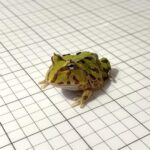 Which Exotic Frog Species Can You Find Online